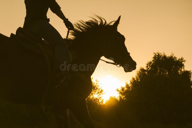 Siluetta di una donna che monta un cavallo - tramonto o alba, orizzontale fotografia stock libera da diritti
