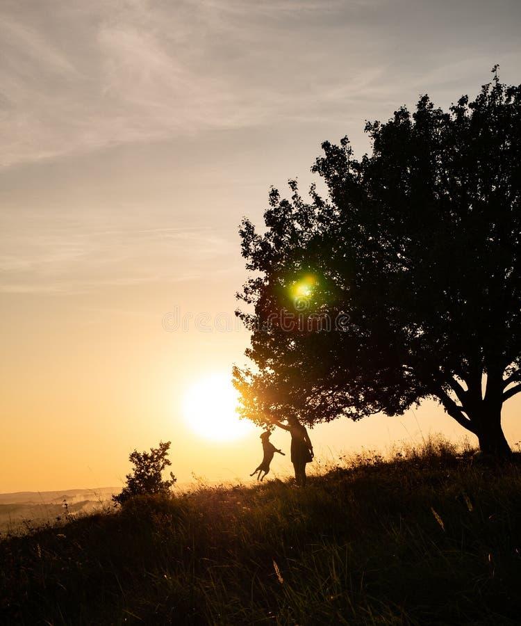 Siluetta di una ragazza che è giocata con un cane sui precedenti del tramonto fotografia stock libera da diritti