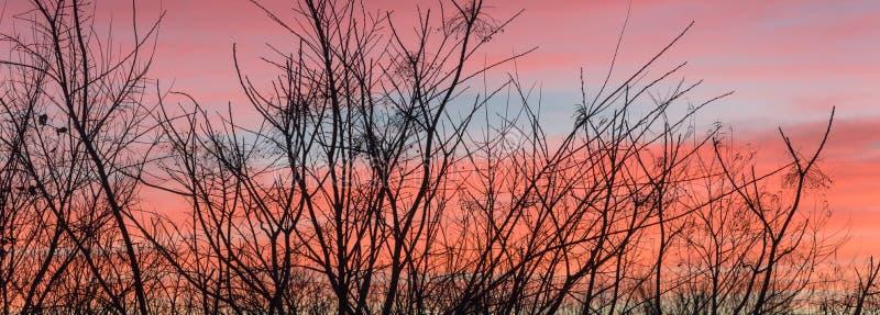 Siluetta di vista panoramica dei rami di albero nudi nell'orario invernale con le belle nuvole di alba fotografia stock