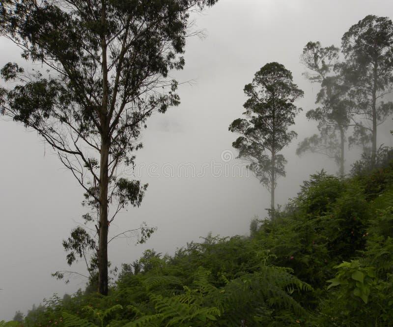 Siluetta nebbiosa degli alberi con nebbia, le nuvole e la foschia in colline fotografie stock