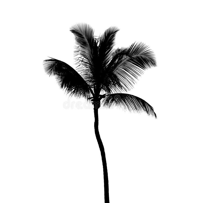 Siluetta nera dell'albero del cocco isolata su bianco fotografia stock