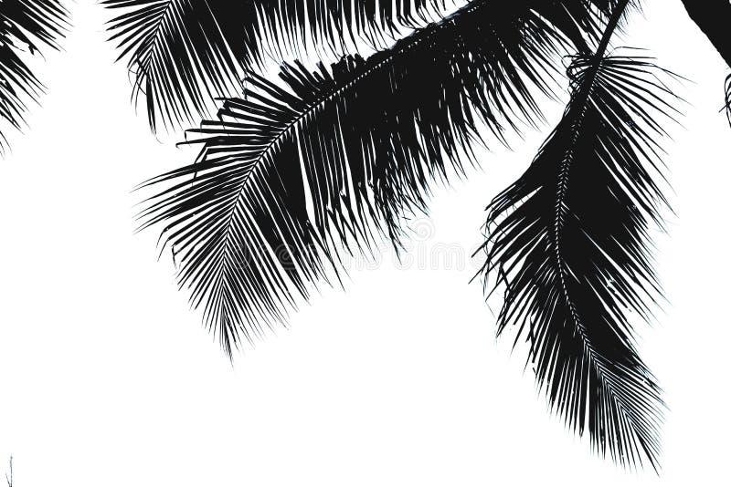Siluetta nera delle foglie della noce di cocco immagine stock