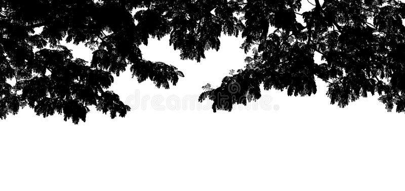Siluetta nera di forma del ramo di albero su fondo bianco, estratto grafico della foglia dell'albero della natura, carta da parat immagine stock