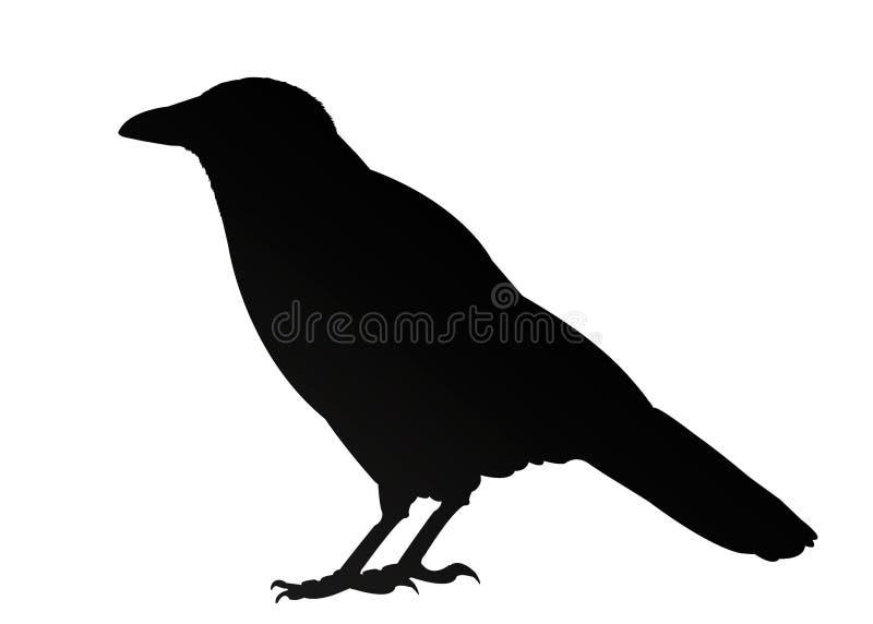 Siluetta nera isolata del corvo su fondo bianco Illustrazione illustrazione vettoriale
