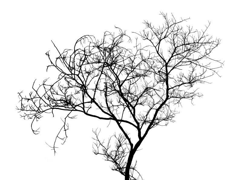Siluetta nuda dei rami di albero su un fondo bianco fotografia stock