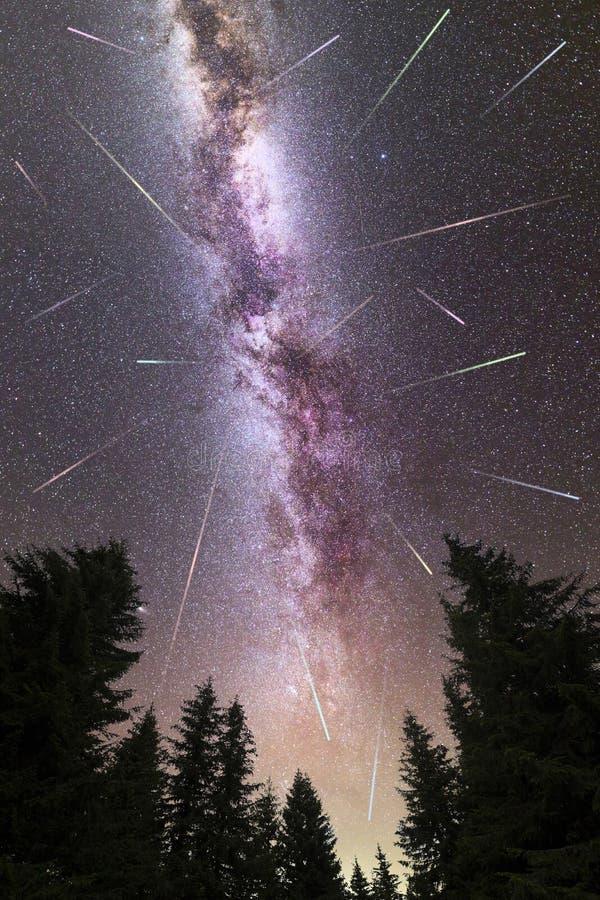 Siluetta porpora dei pini delle stelle cadenti della Via Lattea fotografie stock libere da diritti