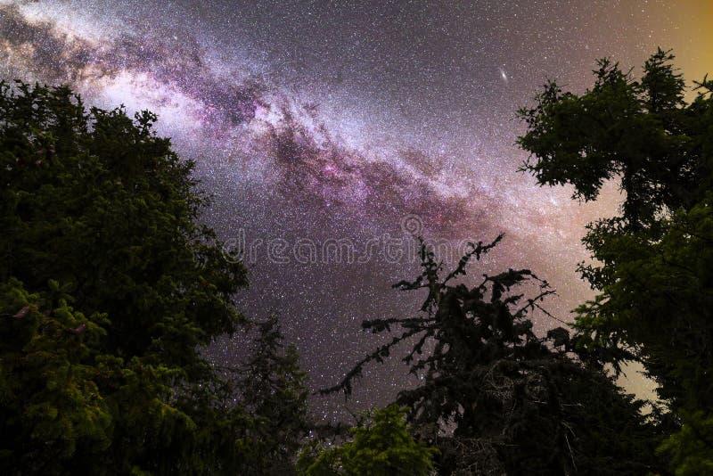 Siluetta porpora dei pini delle stelle cadenti della Via Lattea immagini stock libere da diritti