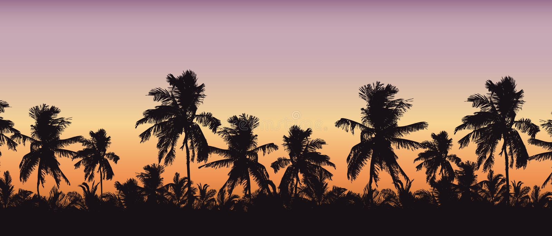 Siluetta realistica delle cime dell'albero, delle palme nel paesaggio tropicale, con il cielo arancio-rosa di mattina e con spazi illustrazione di stock