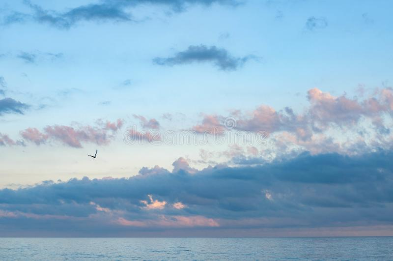 Siluetta sola volante del gabbiano in cielo nuvoloso immagine stock