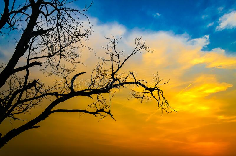 Siluetta sterile dell'albero fotografie stock libere da diritti