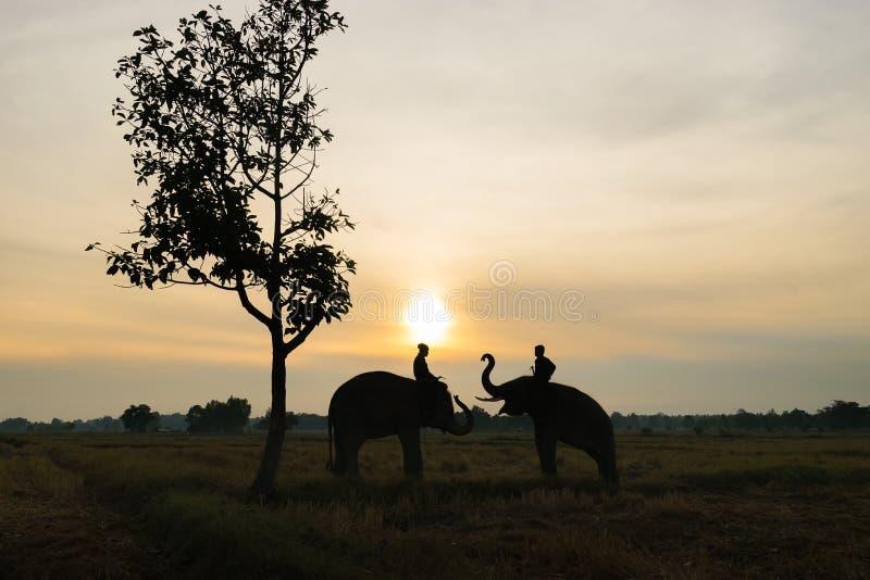 Siluetta tailandese dell'elefante fotografia stock