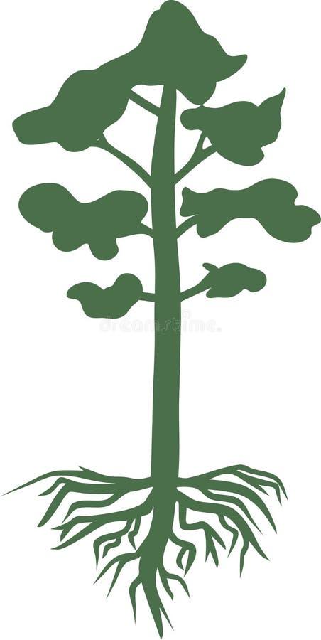 Siluetta verde del pino con il sistema della radice royalty illustrazione gratis