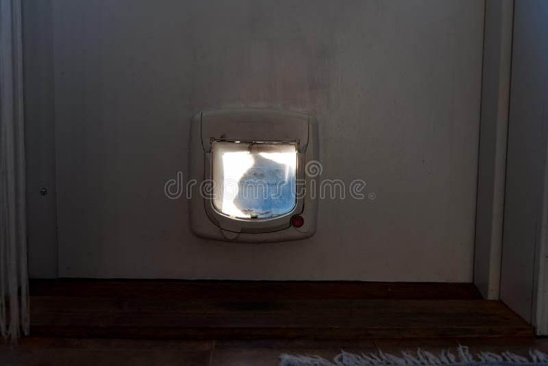 Siluette кота сидя вне щитка кота стоковое изображение
