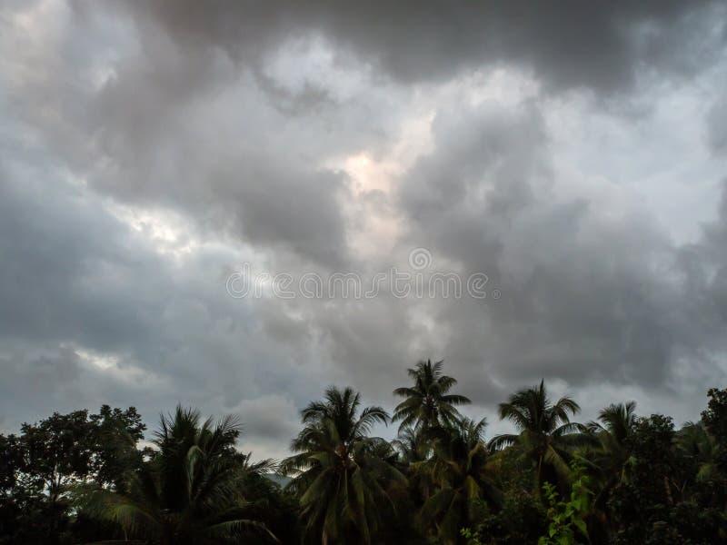 Siluette degli alberi contro il cielo blu e delle le nuvole colorate multi immagine stock