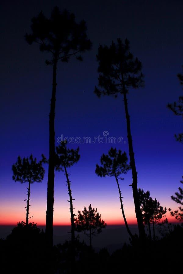 Siluette degli alberi contro la luce del tramonto immagini stock