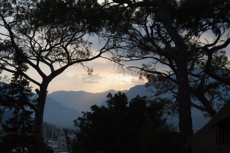 Siluette degli alberi e del tramonto in montagne immagini stock libere da diritti