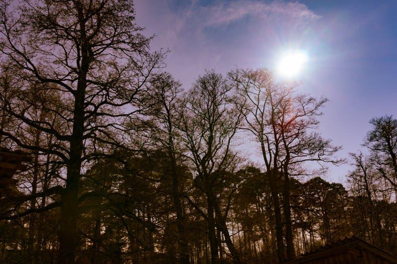 Siluette degli alberi in primavera Bello paesaggio Foto modificata fotografia stock