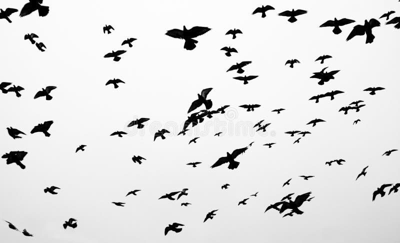 Siluette degli uccelli immagine stock