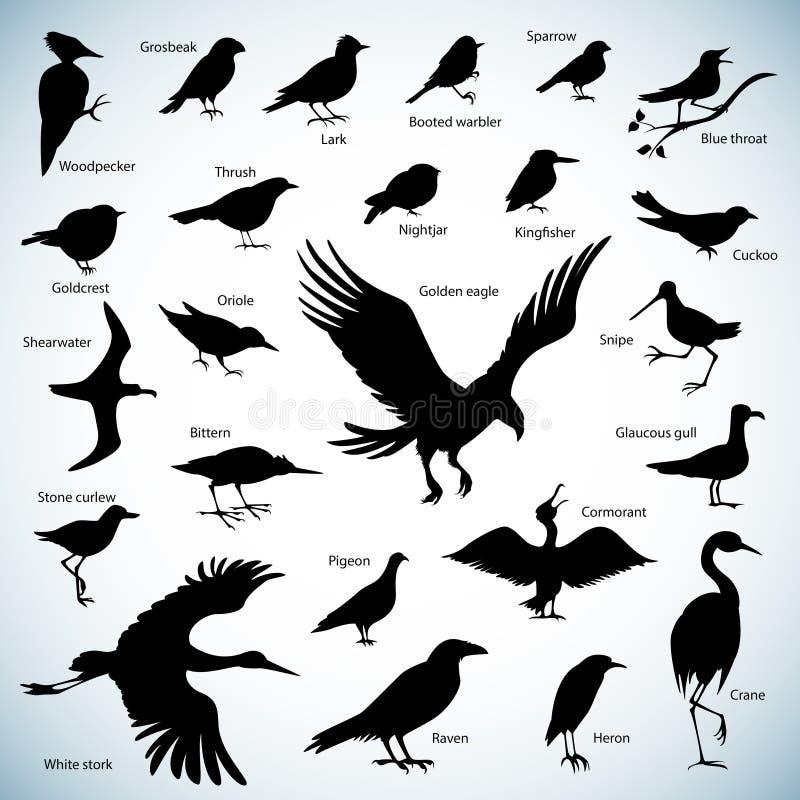 Siluette degli uccelli illustrazione di stock