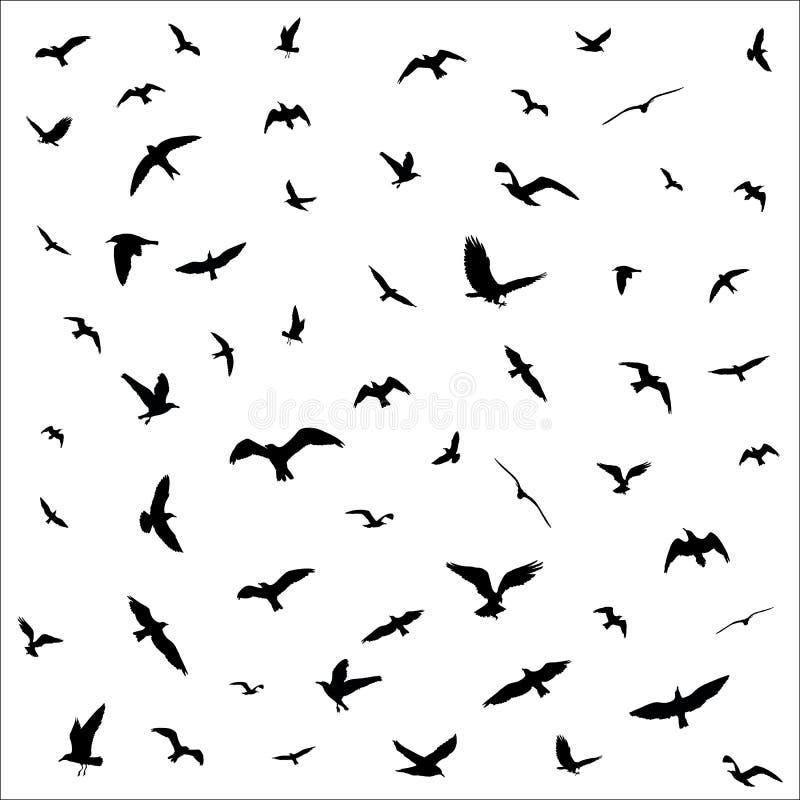 Siluette degli uccelli di volo su fondo bianco illustrazione di stock