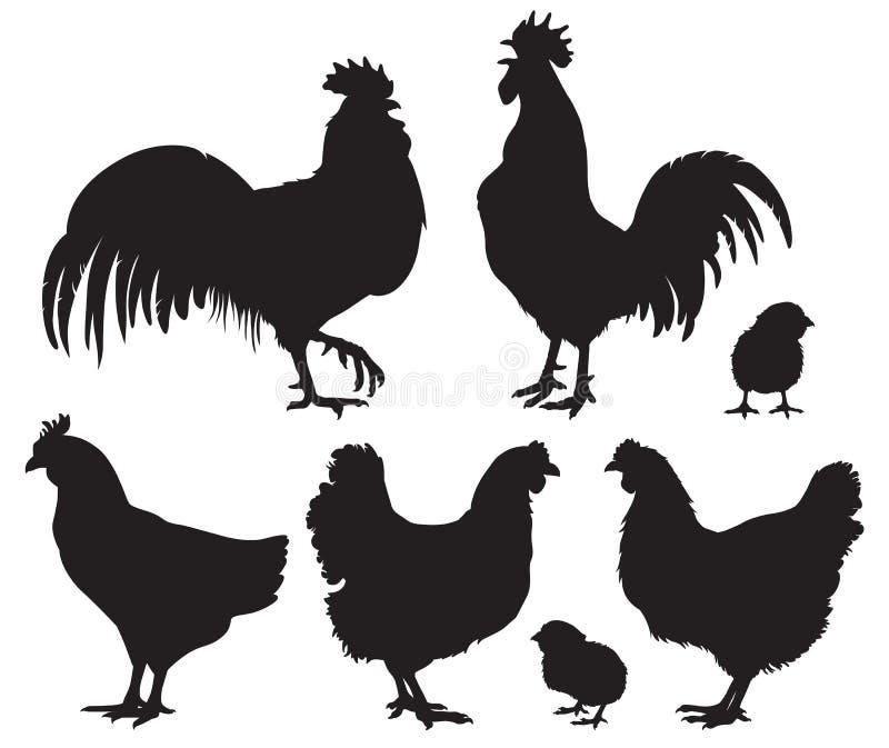 Siluette dei polli - galline, galli e pulcini del bambino illustrazione di stock