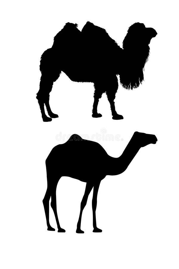 Siluette del cammello su bianco illustrazione di stock