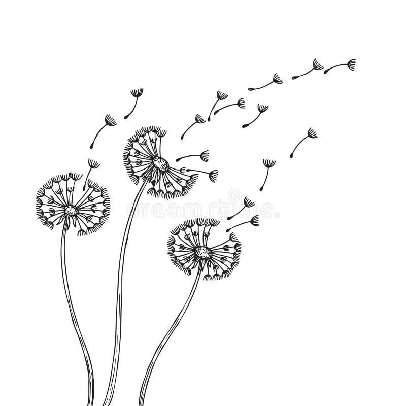 Siluette del dente di leone Semi delicati della pianta del polline dell'erba dei denti di leone che soffiano la molla di vettore  illustrazione vettoriale