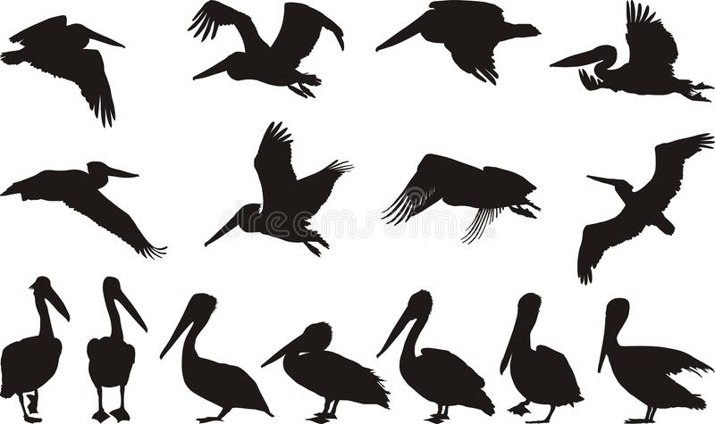 Siluette del pellicano illustrazione di stock
