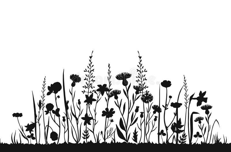 Siluette del Wildflower Giacimento della molla dell'erba selvatica Fondo di erbe di vettore di estate illustrazione vettoriale