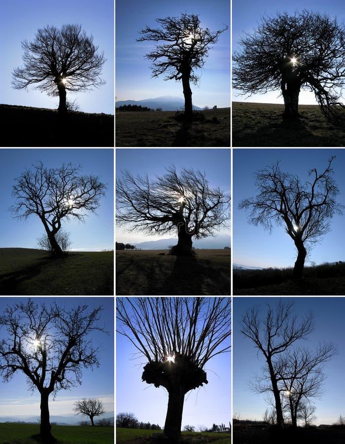 Siluette dell'albero fotografia stock