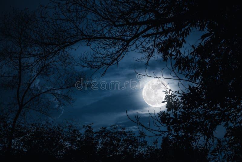 Siluette dell'albero asciutto contro il cielo e la bella luna eccellente Ou fotografia stock