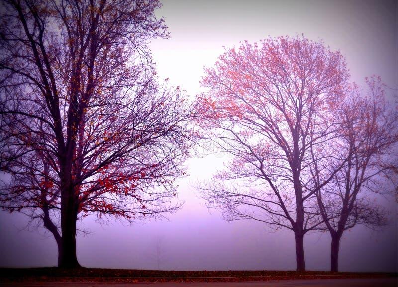 Siluette dell'albero in nebbia densa fotografia stock