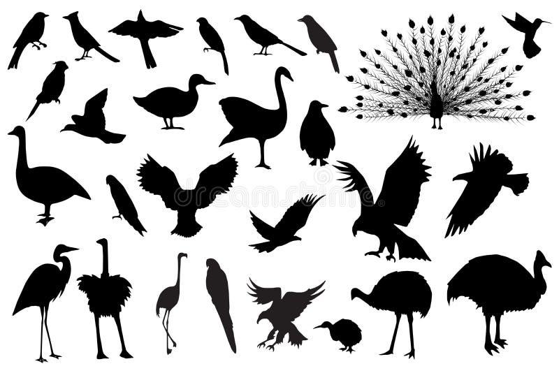Siluette dell'uccello immagine stock