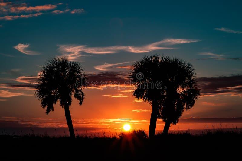Siluette della palma fotografia stock libera da diritti