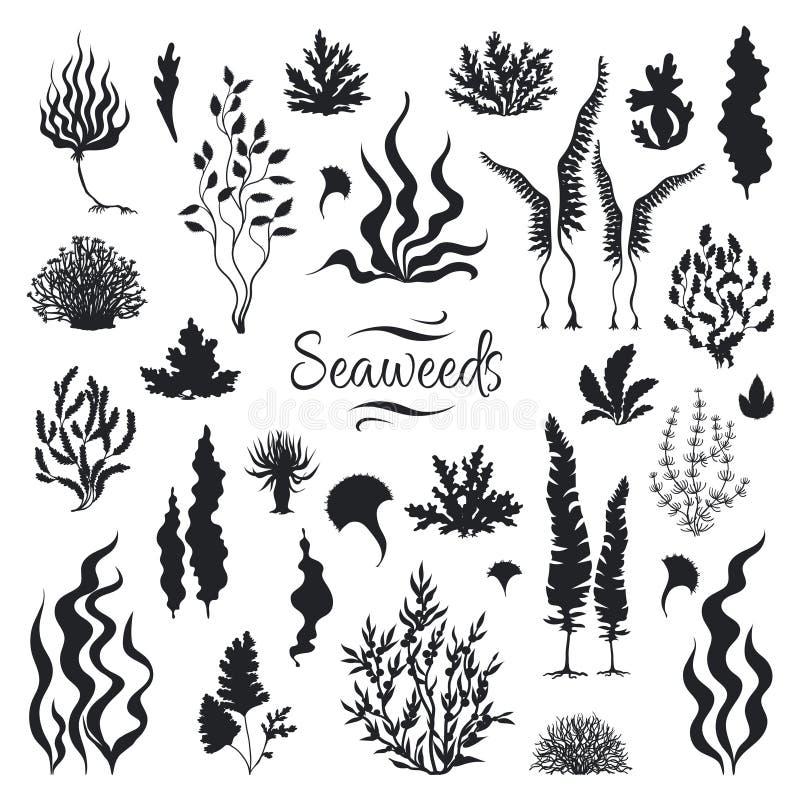 Siluette delle alghe Barriera corallina subacquea, pianta disegnata a mano del fuco del mare, erbacce marine isolate Acquario di  illustrazione di stock