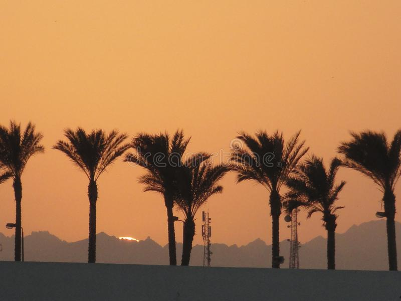 Siluette delle palme contro lo sfondo del cielo e delle montagne tramonto-accesi fotografie stock libere da diritti