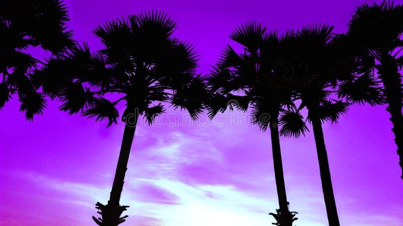 Siluette delle palme sulla spiaggia contro il contesto del tramonto fotografie stock libere da diritti