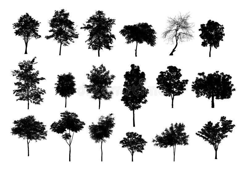 Siluette nere dell'albero su fondo bianco, siluetta degli alberi immagini stock libere da diritti