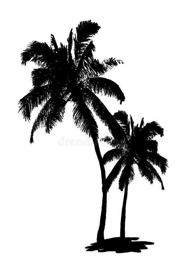 Siluette nere della palma su fondo bianco isolato fotografia stock
