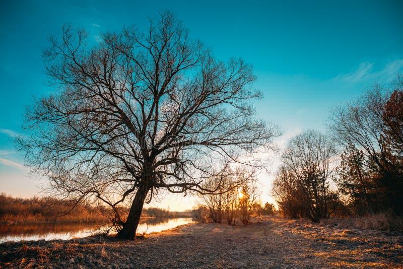 Siluette nere scure degli alberi senza foglie su un fondo di bello cielo in anticipo vibrante di tramonto della molla nave fotografia stock libera da diritti