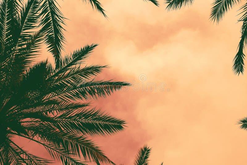 Siluette scure delle palme da datteri contro il cielo variopinto di tramonto Bella priorit? bassa della natura immagine stock