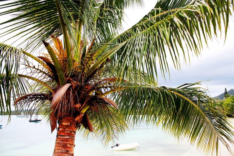 Siluette tropicali al tramonto fotografia stock libera da diritti
