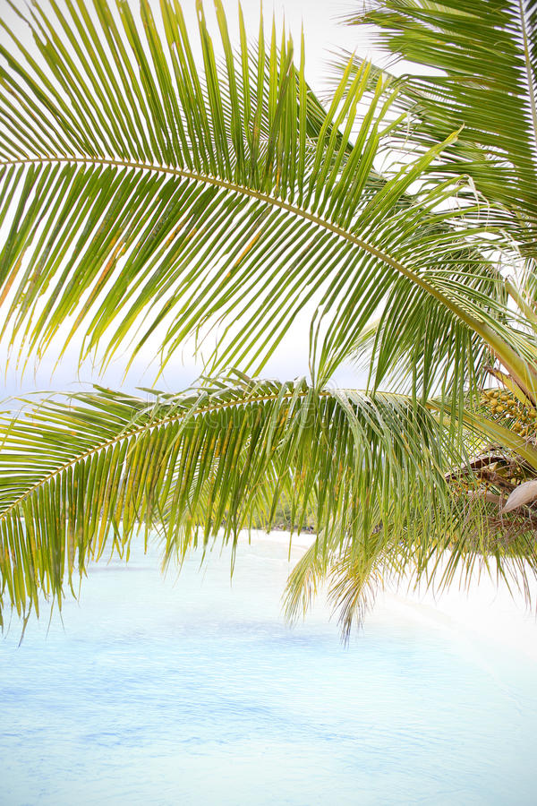 Siluette tropicali al tramonto fotografie stock libere da diritti