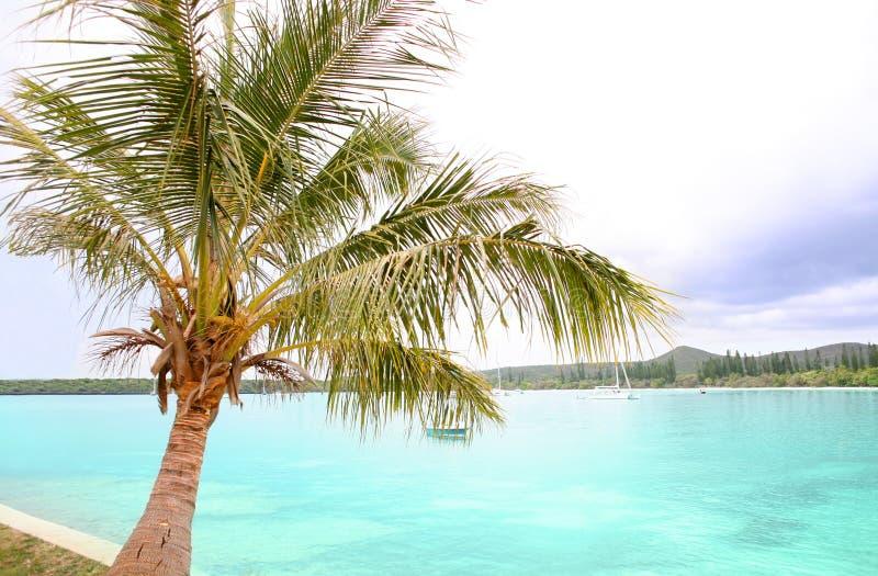 Siluette tropicali al tramonto immagini stock libere da diritti