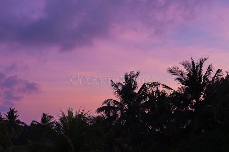 Siluette tropicali delle palme al tramonto fotografie stock libere da diritti