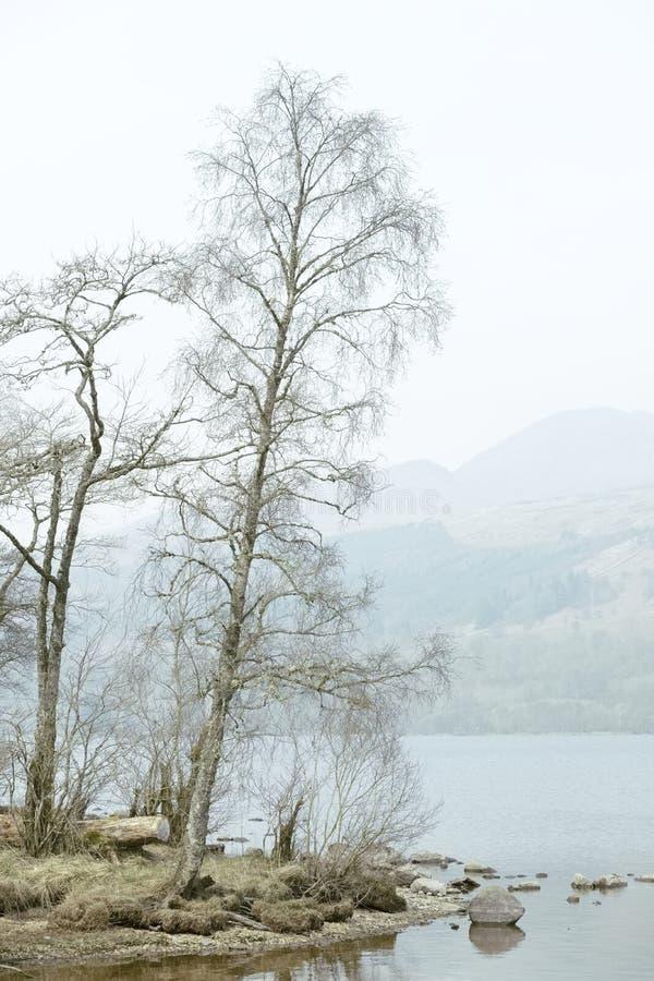 Silver birch tree at Loch Tay Perthshire on misty summer haze morning stock photos