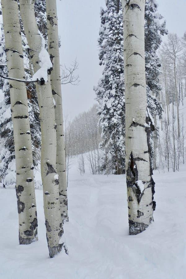 Silver Birches Powder Day: A Christmas Miracle at Beaver Creek Ski Resort. Powder snow day so deep the trails disappear at Beaver Creek Ski Resort near Avon stock images