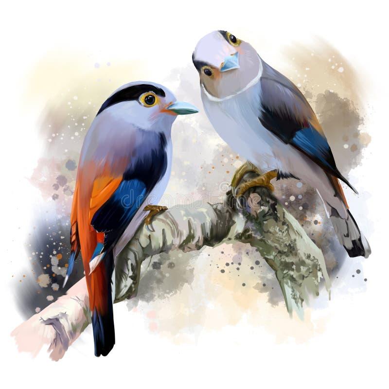 Silver-breasted broadbill vector illustration