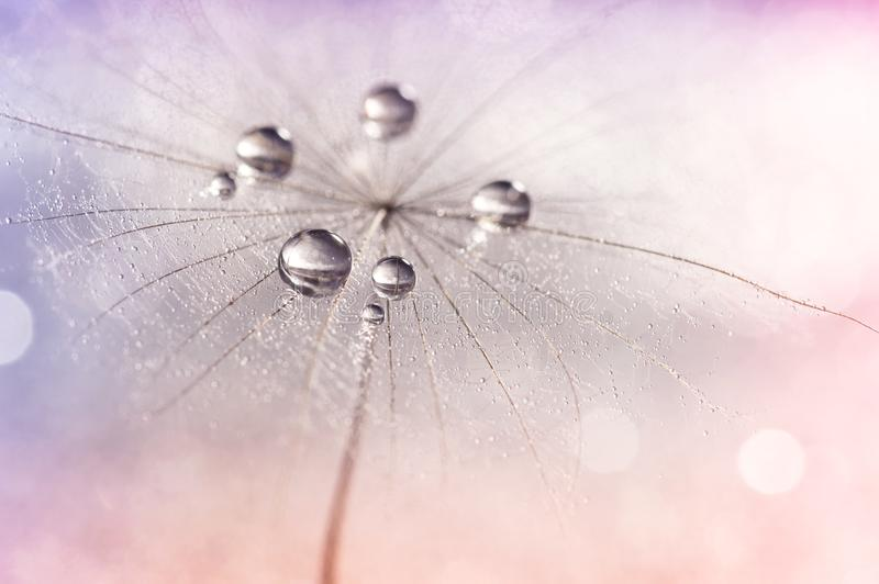 Silver droplets of dew on a dandelion.Selective focus. Dandelion on a multi-colored neyunom background. Silver droplets of dew on a dandelion. Romantic and stock photo