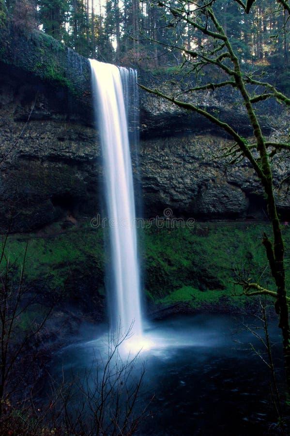 Download Silver Falls stock photo. Image of summer, pacific, lichen - 2920832